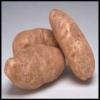 Fuldt overblik over kartoflens gener giver mere effektive afgrøder