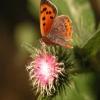 Naturens mangfoldighed er på kraftig retur Biodiversitet