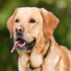 Passer hund ind i din livsstil?
