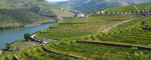 Porto er portvinens fødeby – Og en særdeles SU-venlig destination!