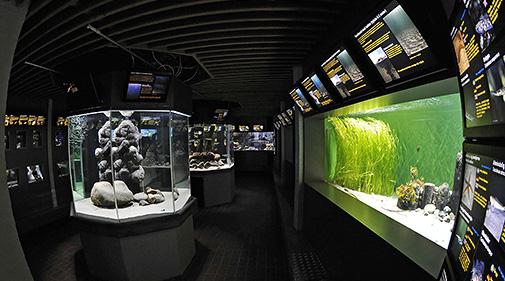 Øresundsakvariet